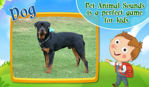 Real Pet Animal Sounds