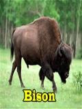 Bison mobile app for free download