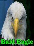 BaldEagle mobile app for free download
