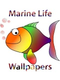 Aquatic Life Wallpapers 240x320TouchPhone mobile app for free download