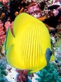 Asha Aquarium mobile app for free download