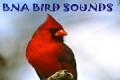 BNA BIRD SOUNDS mobile app for free download