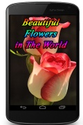 Beautiful Flowers in The World mobile app for free download