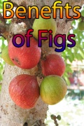 Benefits of Figs mobile app for free download