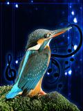 Birds Sound Effects 360x640