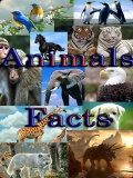 Funny Animal Facts   320x240 mobile app for free download