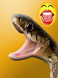 Naughty Snake mobile app for free download