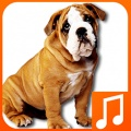 Talking Dog Sounds mobile app for free download