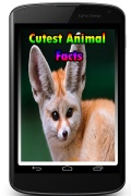 Cutest Animal Facts mobile app for free download