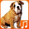 Talking Dog Sounds 2.0 mobile app for free download