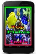 TopFishesofIndia mobile app for free download