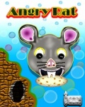 Angry Rat mobile app for free download
