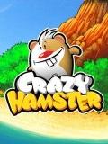 Crazy hamster mobile app for free download