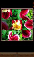Nature Photo Puzzle mobile app for free download