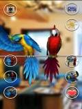 Talking Parrot Couple mobile app for free download