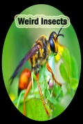 WeirdInsects mobile app for free download