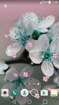Spring Flowers Live Wallpaper mobile app for free download