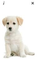 PicoBrothers PuppyTalk v1.1.1 Signed mobile app for free download