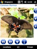 Pocket Butterflies Singapore mobile app for free download