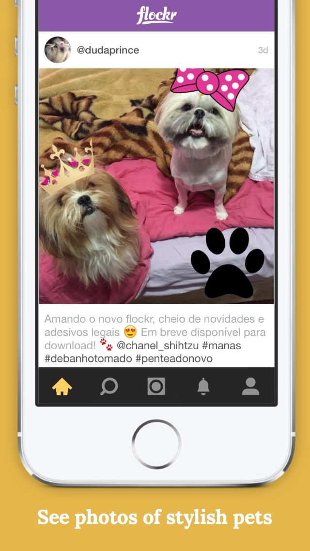 Flockr   Pet Social Network