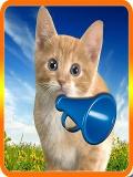 Talking Cat Sound mobile app for free download